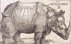 Düerer's Rhinoceros shows features like a horn on its back that are not an accurate depiction of a rhinoceros. Nevertheless, these anatomical inaccuracies did not stop Dürer's woodcut of an Indian rhinoceros from becoming a famous icon in the 18th century.