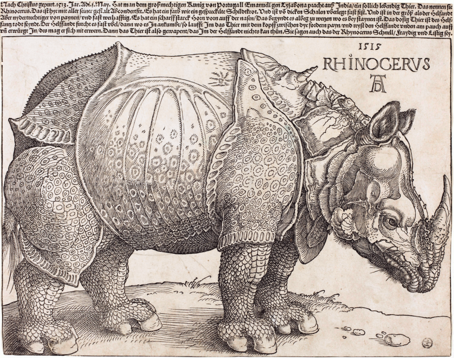 Recreating Düerer's Rhinoceros